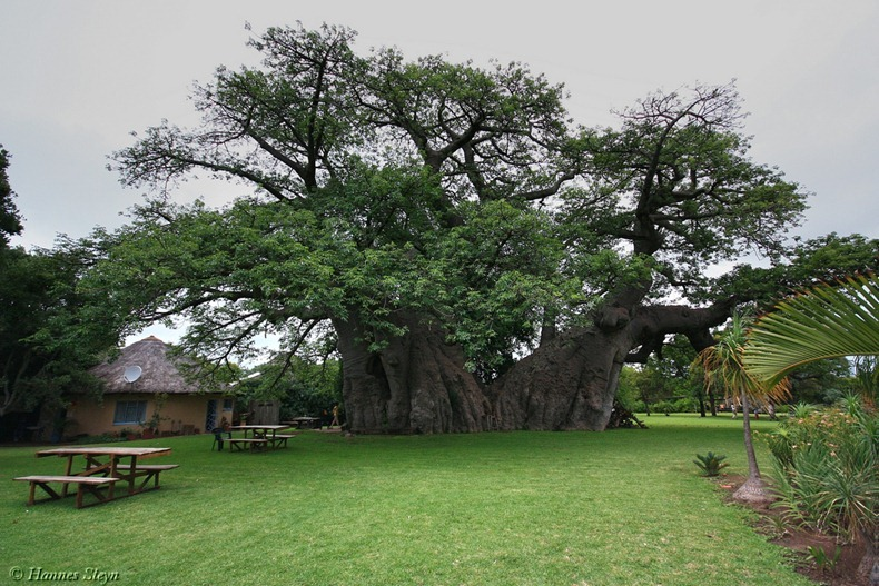 sunland-baobab-bar-001.jpg