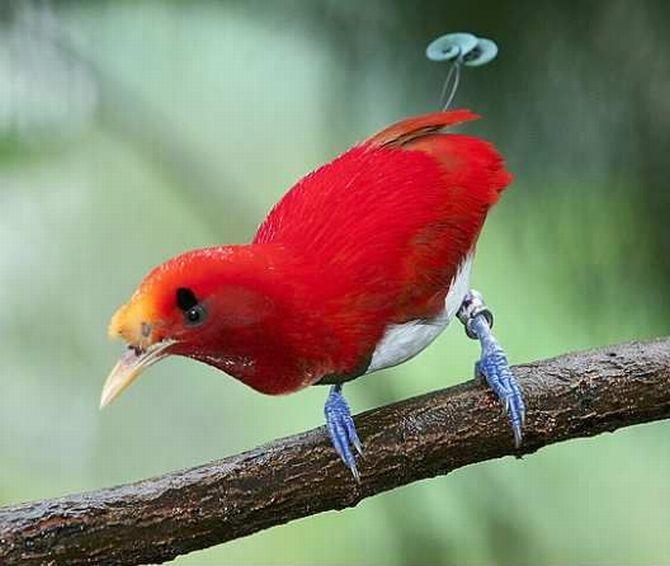 http://www.mirkrasiv.ru/images/articles/australia/bird-paradise-004.jpg