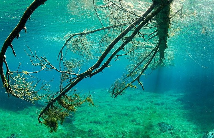 Зелёное озеро gruner see трагос австрия