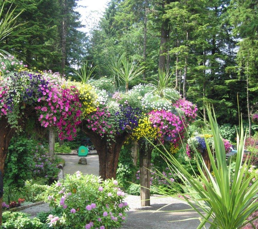 Ботанический Сад Ледник (Glacier Gardens) деревья вверх тормашками, деревья-клумбы, Джуно, Аляска