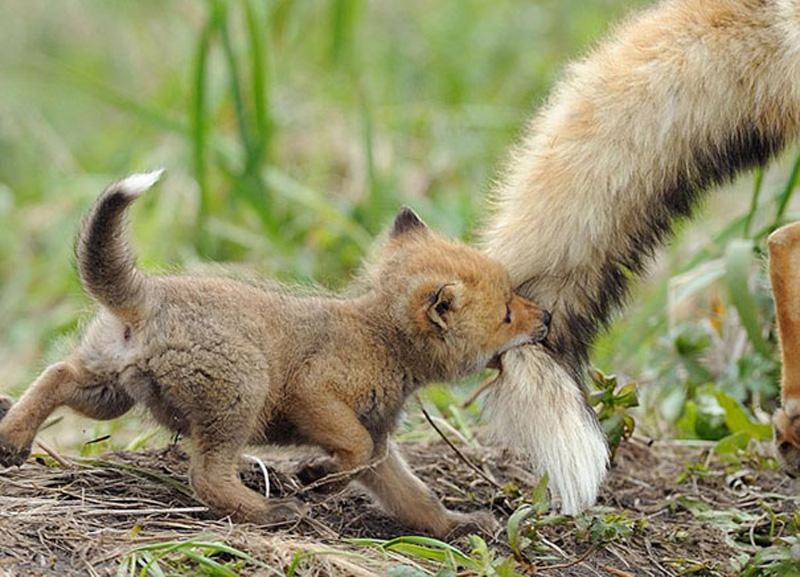 Детёныши животных, милые, смешные