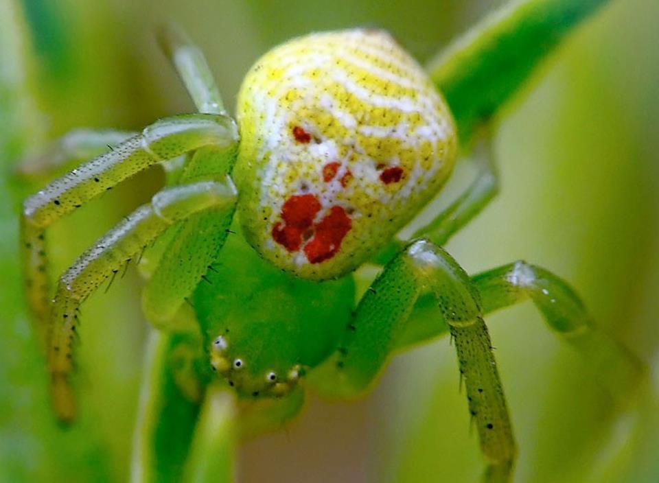 smile-spider-014.jpg