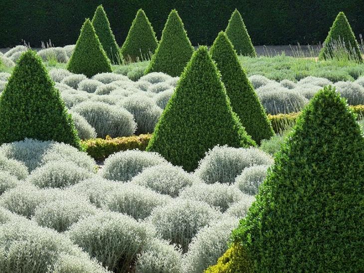 Топиарные сады, красота, садовое искусство, растения, деревья,