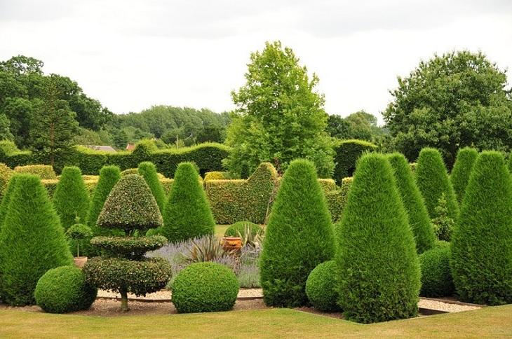 Топиарные сады, красота, садовое искусство, растения, деревья