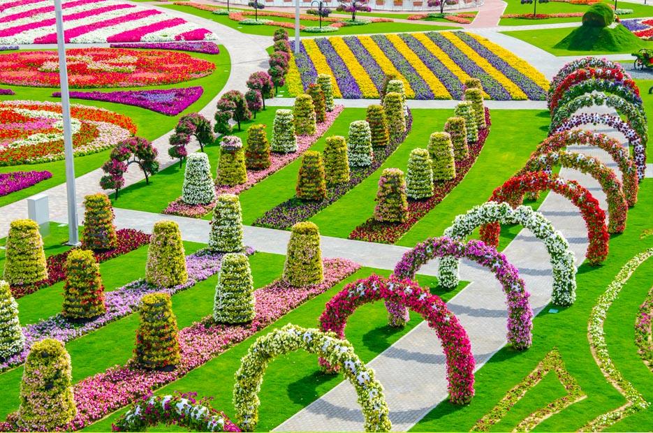 Чудо Сад в Дубай, (Dubai Miracle Garden), парк, ОАЭ