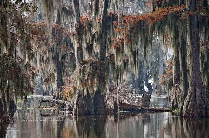 Фантастические кипарисы озера Каддо (Caddo lake), США