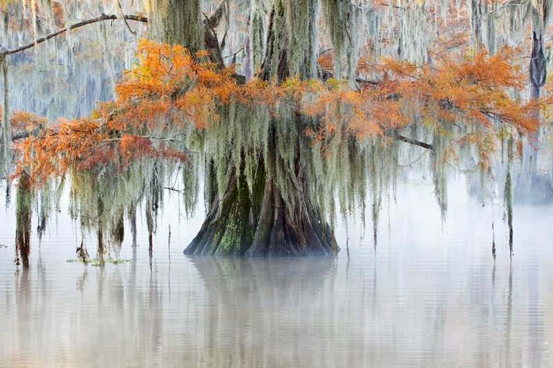 Фантастические кипарисы озера Каддо, США