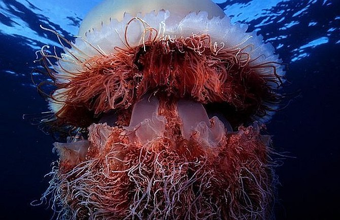 Самые страшные медузы в мире