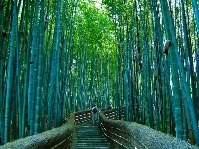 Лес сагано sagano bamboo forest в киото япония