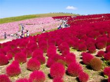 Парк Хитачи-Сисайд (Hitachi Seaside Park) Хитатинака, префектура Ибараки, Япония